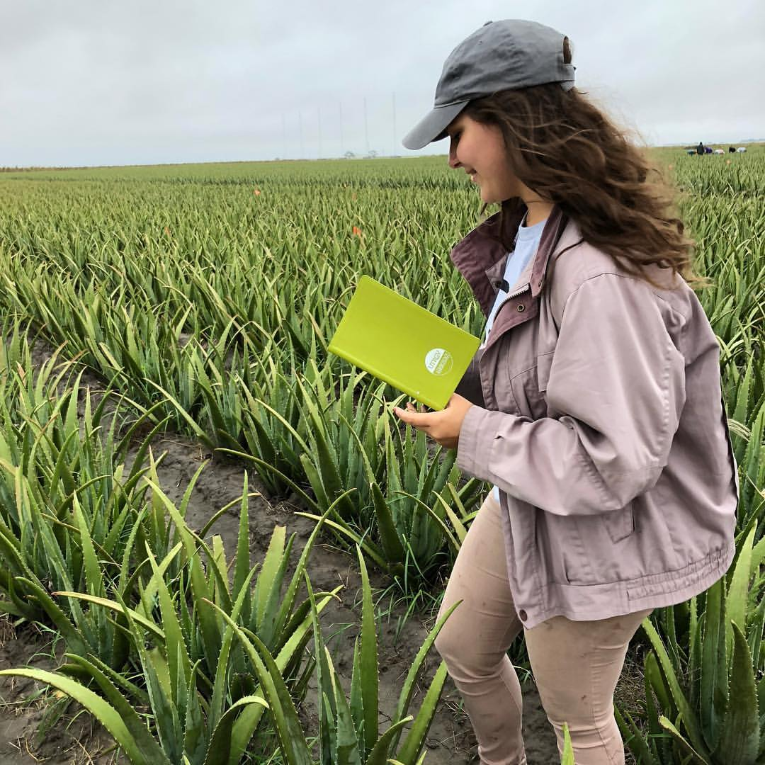 Student conducting research in a field
