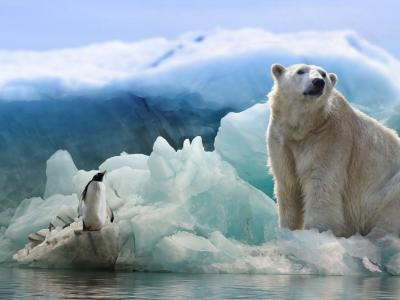 Photo of penguin and polar bear on ice